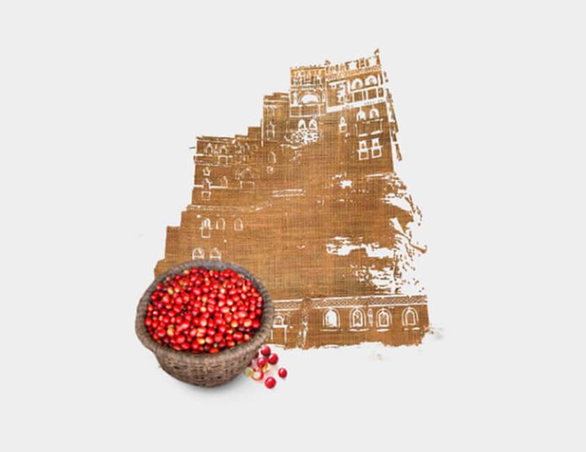Cultivado no Iêmen }